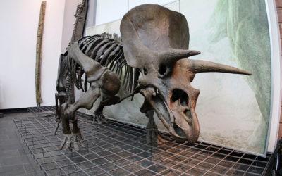 Tags im Museum – Der geheimnisvolle T-Rex